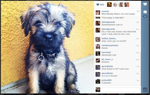 Muddy Waters. From ZZ's Instagram.