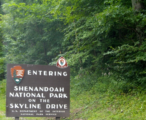 Day eight:  Shenandoah National Park's Skyline Drive. We hit a bear. Well, it hit us. We think it's okay. We're okay. Oh my.