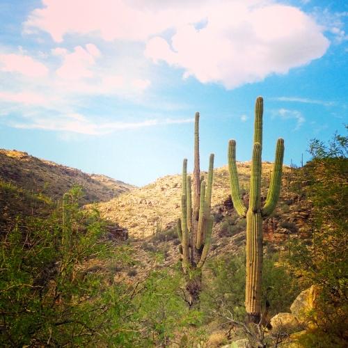 Cacti heading up Mt. Lemmon in Tucson